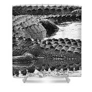 Gator 2 18 Shower Curtain