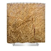 Natural Abstracts - Elaborate Shapes And Patterns In The Golden Grass Shower Curtain