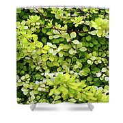 Natural Background With Small Yellow Green Leaves. Shower Curtain