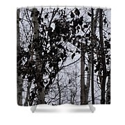 Natural Black And White Shower Curtain