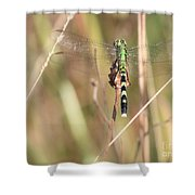 Natural Canvas With Dragonfly Shower Curtain