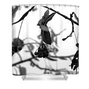 Natural Composition II Shower Curtain