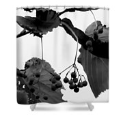 Natural Composition Shower Curtain