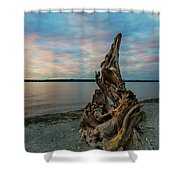 Natural Driftwood At Birch Bay State Park Shower Curtain