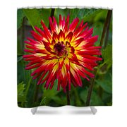 Natural Fireworks Shower Curtain