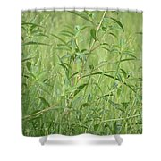 Natural Green Screen Shower Curtain