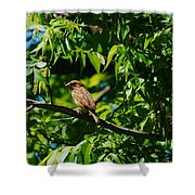 Natural Insect Repellant Shower Curtain