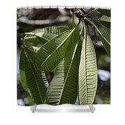 Natural Leaf Shower Curtain