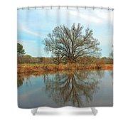 Natural Light Shower Curtain