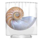 Natural Nautilus Seashell On White Shower Curtain