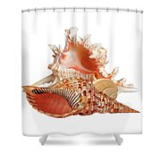 Natural Shell Collection On White Shower Curtain