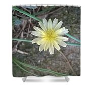 Natural... White And Yellow Flower Shower Curtain