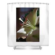Naturally Elegant Shower Curtain