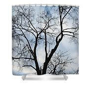 Nature - Tree In Toronto Shower Curtain