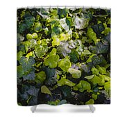 Nature Abstract 5 Shower Curtain