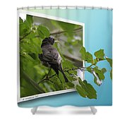 Nature Bird Shower Curtain