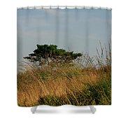 Nature Bonzai In The Evening Sun Shower Curtain