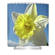 Nature Daffodil Flowers Art Prints Spring Nature Art Shower Curtain