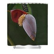 Nature Ear Shower Curtain