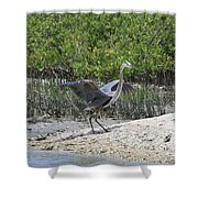 Nature In Florida Shower Curtain