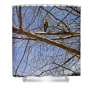 Nature In The Wild - Annoucing Spring Shower Curtain