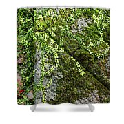 Nature - Living Retention Wall 1 Shower Curtain