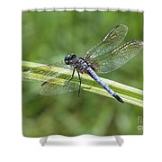 Nature Macro - Blue Dragonfly Shower Curtain
