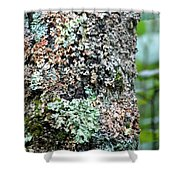 Nature Painted Tree Bark Shower Curtain