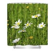 Nature Spring Scene White Wild Flowers Shower Curtain