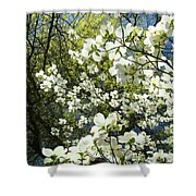Nature Tree Landscape Art Prints White Dogwood Flowers Shower Curtain