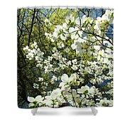 Nature Tree Landscape Art Prints White Dogwood Flowers Shower Curtain
