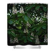 nature Ukraine blooming chestnuts Shower Curtain