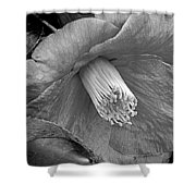Nature's Beauty In Black And White Shower Curtain
