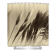 Natures Brushes Shower Curtain