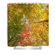 Natures Canopy Of Color Shower Curtain