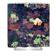 Natures Canvas Shower Curtain