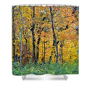 Nature's Colors Shower Curtain