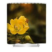 Natures Colours 001 Shower Curtain