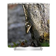 Nature's Detail Shower Curtain