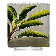 Early Morning Raindrops Shower Curtain