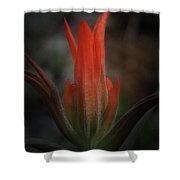 Nature's Fire Shower Curtain
