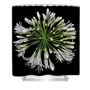 Natures Fireworks - Lily Of The Nile 005 Shower Curtain