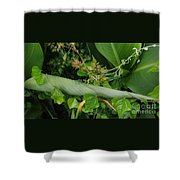 Nature's Gift Wrap Shower Curtain