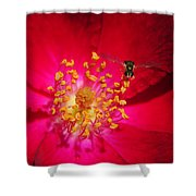 Natures Glow Shower Curtain
