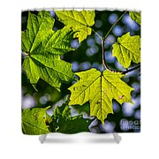 Natures Going Green Design Shower Curtain