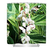 Nature's Next Creation Gp Shower Curtain