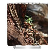 Natures Renewal  Shower Curtain