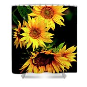 Natures Sunflower Bouquet Shower Curtain