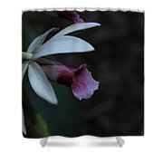 Natures Touch Shower Curtain