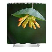 Nature's Umbrella Shower Curtain